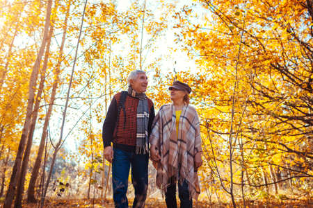 Fall season walk. Senior family couple walking in autumn park among yellow trees. Happy man and woman spending time together outdoors