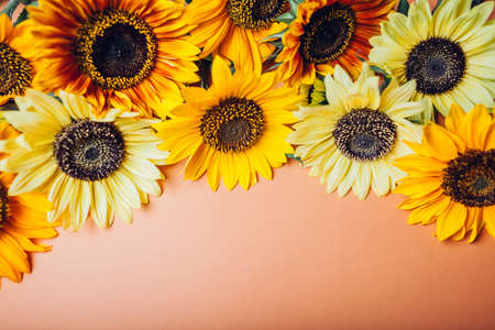 Bunch of yellow orange lime sunflowers with dark center put in rows on background. Group of fall summer flowers. Space