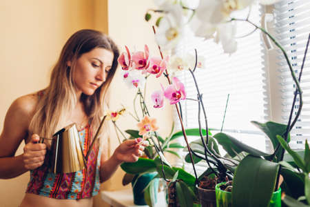 Woman taking care of orchids blooming on window sill. Girl gardener watering home plants and flowers with watering can enjoying hobby.