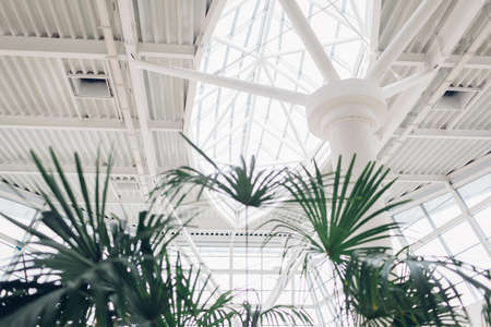 Modern buildings. Shopping center interior design. High tech architecture with nature indoors. Transparent roof with window on column.