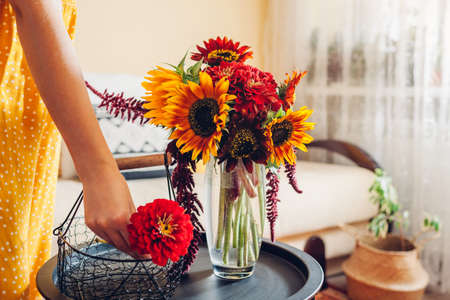 Close up of bouquet arrangement. Woman puts sunflowers and zinnias in vase on table at home. Fresh fall yellow red brown blooms. Interior and decor