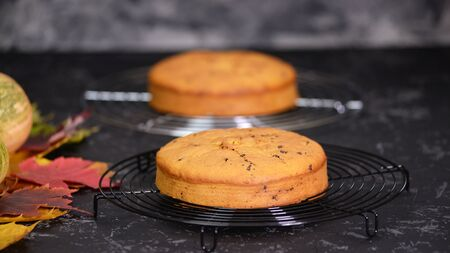 Freshly baked biscuit cake with chocolate chips close-up on the table. Stockfoto