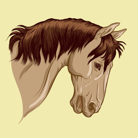 Painted portrait of horse. Head of light bay suit stallion with dark mane. Vector isolated on a wheat color background.
