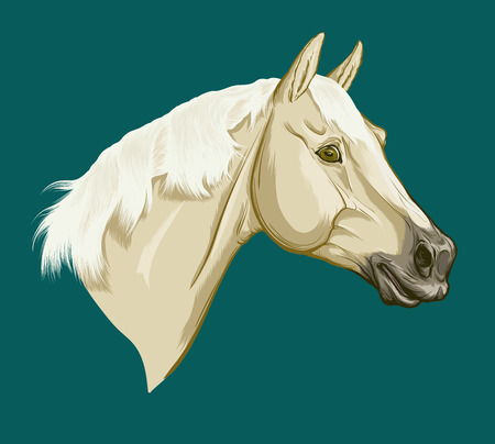 Painted portrait of Trakehner. Head of light Palomino suit horse. Vector isolated on an azure blue background.