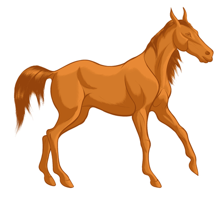 Quick sketch of red horse with brown mane, walking free. Vector clip art and design element for equestrian farms. Emblem of an agricultural animal.
