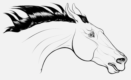 Linear portrait of horse craned its neck forward, laid his ears back. Head of a running steed with fluttering mane. Vector clip art, design element for equestrian goods and show jumping clubs.