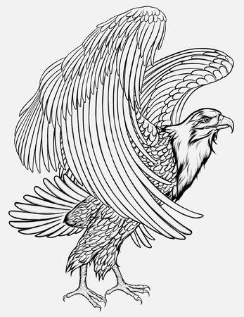 Eagle flaps its wings, preparing to take off. Linear vector illustration of the hawk standing on the ground.