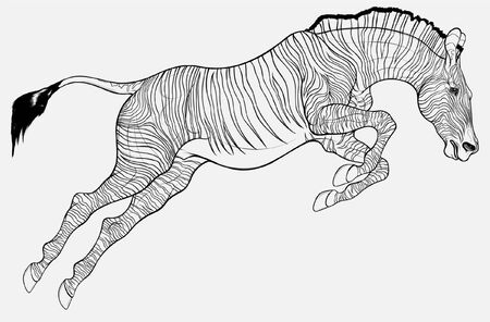 Striped stallion overcomes an obstacle. Zebra at the beginning of the jump. Linear vector illustration for safari and wildlife tourism.