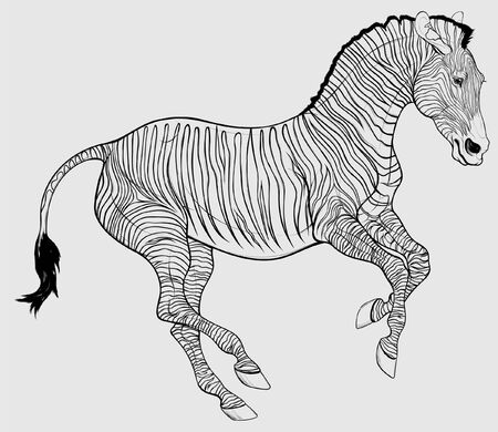 Linear illustration of a free galloping zebra. The young stallion excitedly pulled his ears back and moving at a fast pace. Vector clip art, decoration element for safari and wildlife tourism. 矢量图像