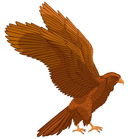 Brown falcon spread its wings, preparing to take off. Colored vector illustration of a hawk. Image of a bird of prey.