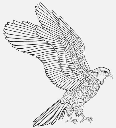 Black and white falcon spread its wings, preparing to take off. Linear vector illustration of a hawk. Image of a bird of prey. Ilustrace