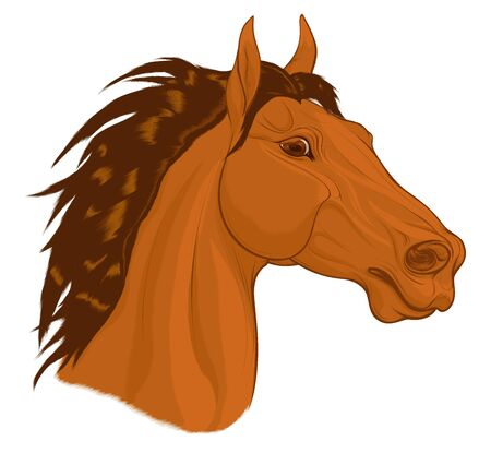 Portrait of a chestnut horse with long mane. Stallion pricked up its ears and stared ahead warily with flared nostrils. Vector emblem, design element for stud farms and equestrian clubs. Ilustração