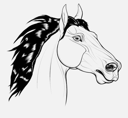 Linear portrait of a horse with long mane. Stallion pricked up its ears and stared ahead warily with flared nostrils. Vector emblem, design element for equestrian goods and coloring books.