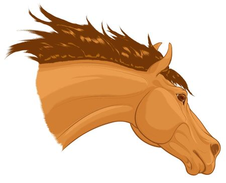 Portrait of a running sorrel horse with long fluttering mane. Stallion lowered its head. Vector clip art for stud farms and equestrian clubs.