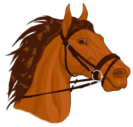 Portrait of a chestnut horse dressed in English bridle with a snaffle bit. Stallion pricked up its ears and stared ahead warily with flared nostrils. Vector emblem for stud farms, equestrian clubs.