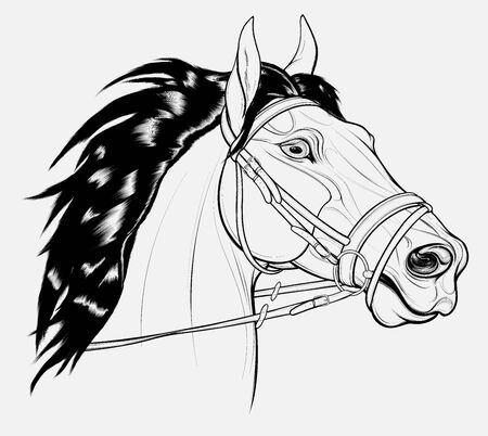Linear portrait of a horse dressed in English bridle with a snaffle bit. Stallion pricked up its ears and stared ahead warily with flared nostrils. Vector emblem for equestrian goods, coloring books. Ilustração