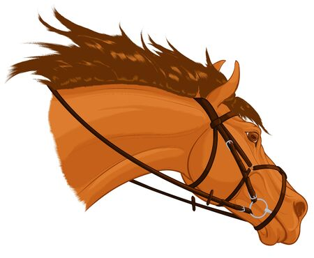 Portrait of a running sorrel horse dressed in figure eight noseband bridle. Stallion lowered its head. Vector clip art for stud farms and equestrian clubs.