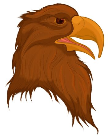 Head of a disheveled brown eagle, looking predatory. Colored vector illustration of a bird of prey. Çizim