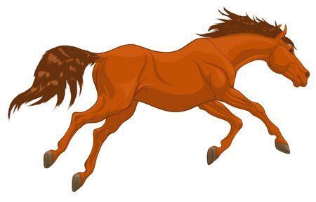 Running sorrel horse with long fluttering mane. Stallion lowered its head and galloping with legs stretched out. Vector clip art for equestrian goods.
