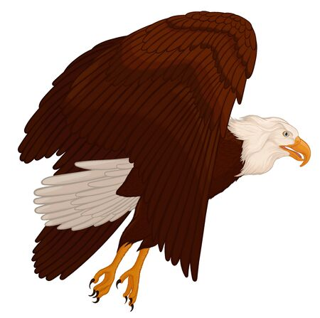 Bald eagle flies. Soaring bird of prey flaps its wings and glides through the air rising into the sky. Colored vector illustration of a hunting hawk. Ilustrace
