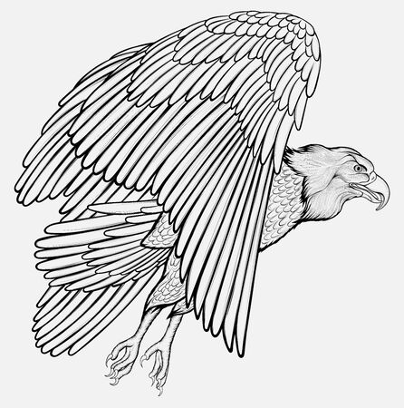 Eagle flies. Soaring bird of prey flaps its wings and glides through the air rising into the sky. Linear vector illustration of a hunting hawk.