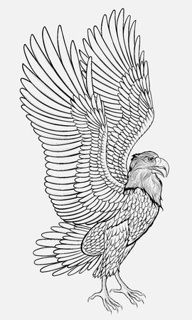 Eagle spread its wings preparing to fly. Linear vector illustration of a hunting bird of prey.