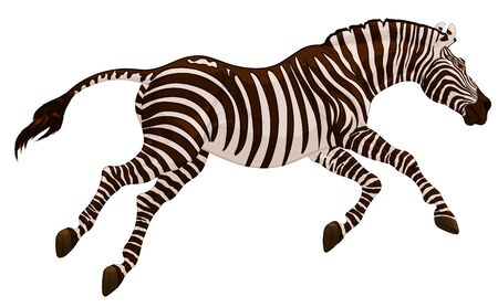 Running striped horse lowered its head and gallops with legs stretched out. Colored vector illustration for safari and wildlife tourism.