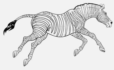 Running striped horse lowered its head and gallops with legs stretched out. Linear vector illustration for safari and wildlife tourism.