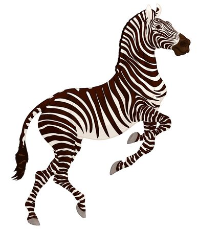 Zebra reared and stands on one leg. Prancing striped stallion pricked up its ears and stared ahead with dilated nostrils. Emblem for african wildlife tourism.