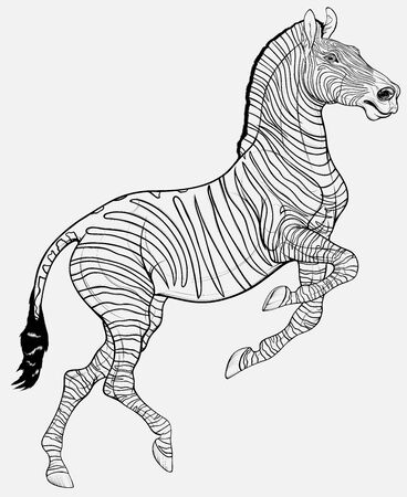 Linear black and white zebra reared and stands on one leg. Prancing striped stallion pricked up its ears and stared ahead with dilated nostrils. Emblem for african wildlife tourism. 向量圖像