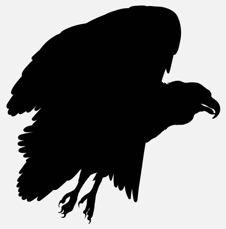 Black silhouette of a flying eagle. Soaring bird of prey flaps its wings. Vector image of a hunting hawk.