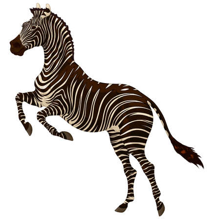 Plains zebra reared before jumping. Striped stallion laid its ears back and stands on its hind legs. Color vector design element for african wildlife tourism and safary.