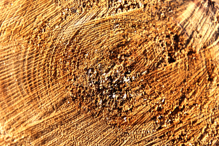 felled: Wooden texture. Felled Tree which is located outdoor