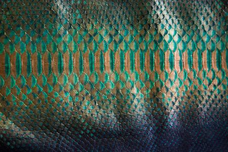 Trendy green painted snake python skin surface texture close up for background and wallpaper