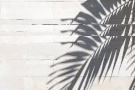 Tropical palm leaves shadows on white wall textured background. Summer trendy concept.