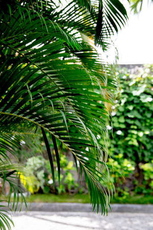 Green plants with stems and leaves in the tropical climate. Bali Indonesia.