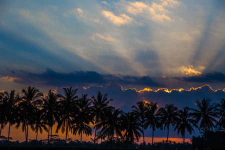 Coconut palms silhouette on paradise colorful sunset. Bali, Indonesia.