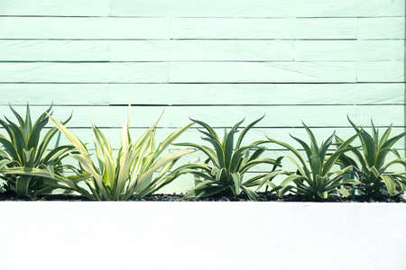 Green small bushes of tropical plants with wooden wall background. Nature concept. Place for text. 스톡 콘텐츠