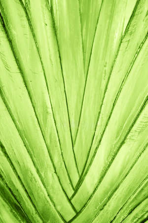 Tropical green palm leaf, natural pattern background. Macro. 스톡 콘텐츠