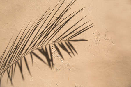 Shadow of natural palm leaves falling cracked concrete wall for background and wallpaper 스톡 콘텐츠