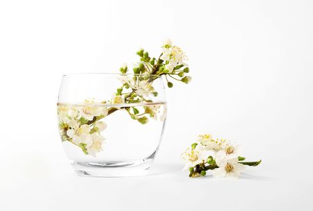 vase with a plums flower branch on white background