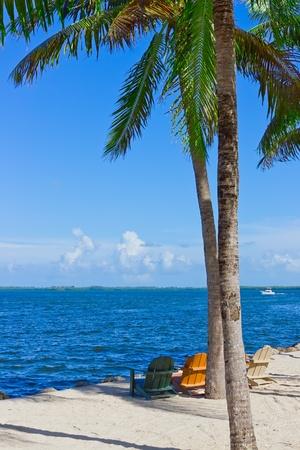tropical white sand beach with palm trees and beach chairs Фото со стока