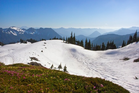 scenic view of snow covered mountains and wildflowers in mount rainier national park, washington