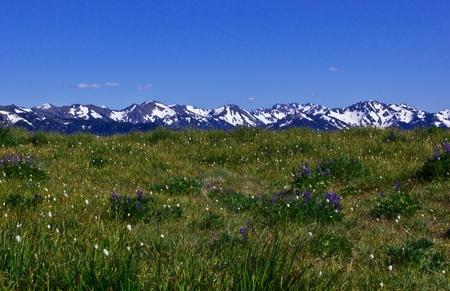 Mountain Landscape at Hurricane Ridge, Olympic National Park, Washington, USA