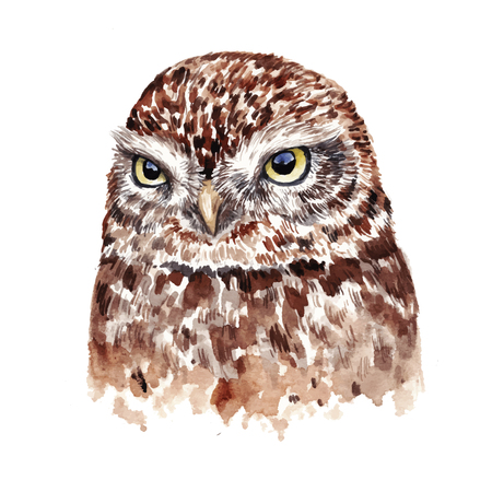 ornithologist: Watercolor realistic owl. Hand drawn illustration