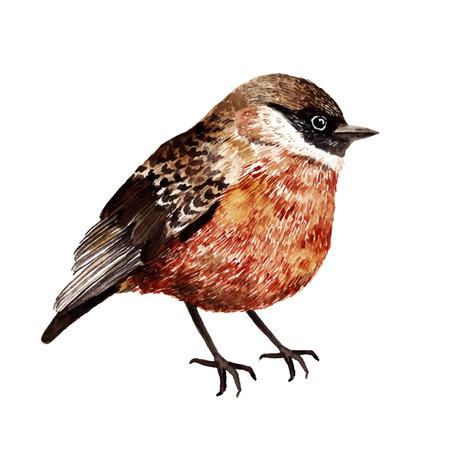 Watercolor vector bird Stock Photo