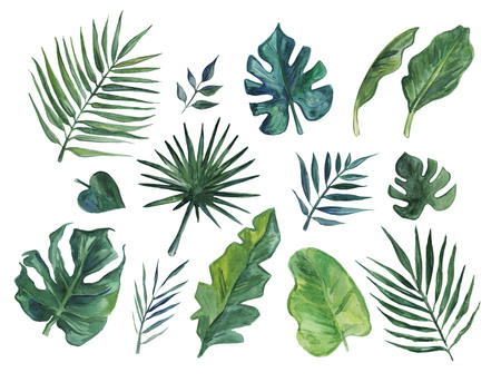 Hand drawn watercolor of tropical leaves Stockfoto