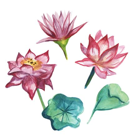 Set of Lotus flowers and leaves on white background. Watercolor illustration.