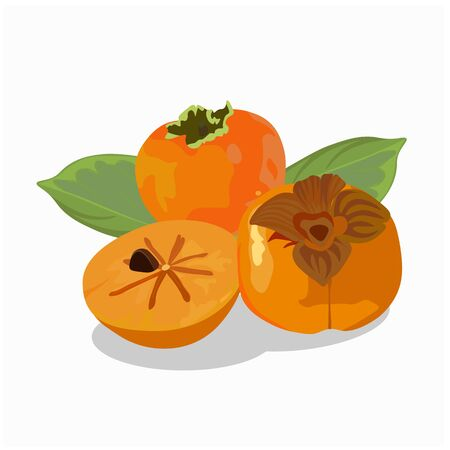 Traditional winter dish. Vector illustration of ripe juicy yellow fruits. Round orange persimmon with green leaves. Close up of fresh kaki.