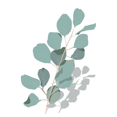 Vector stock illustration of eucalyptus leaves. Delicate tropical leaves for the bride's bouquet. A branch of mint-colored flowers. Spring or summer flowers for invitation, wedding or greeting cards